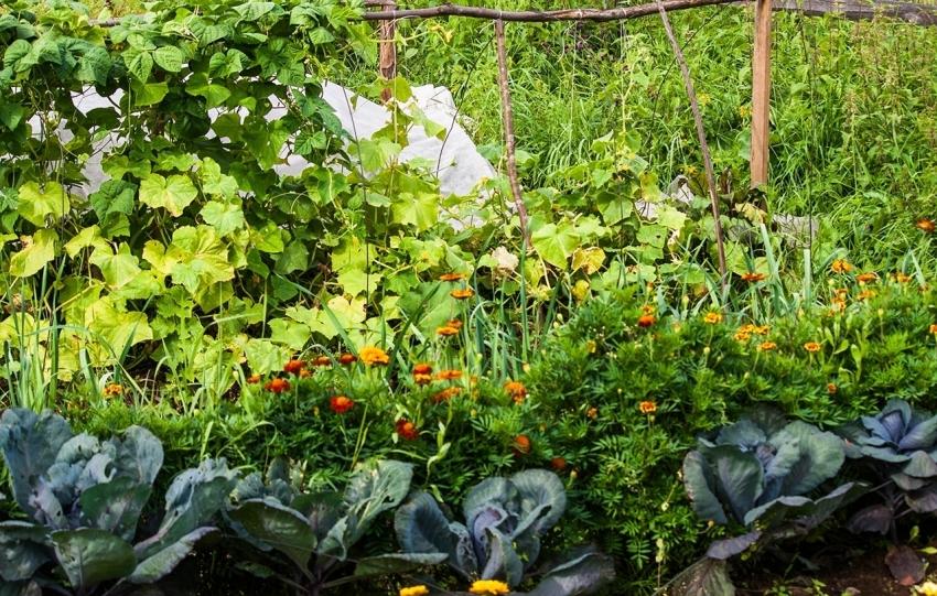 Даже на небольшой территории можно получить высокую урожайность, использовав таблицу соответствия растений-соседей при посадке