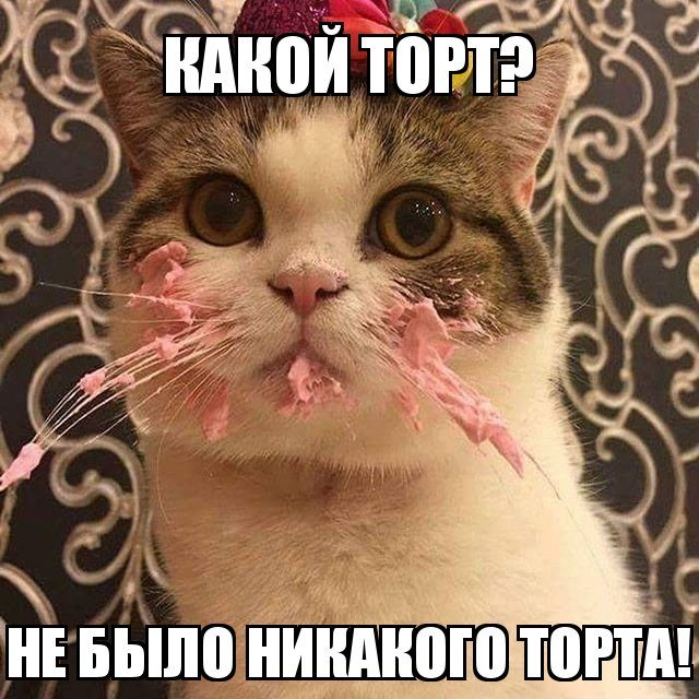Забавный котопост)