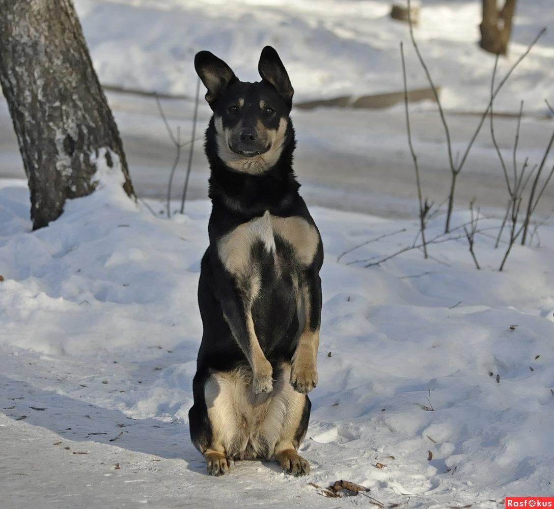 Веселые истории про собак