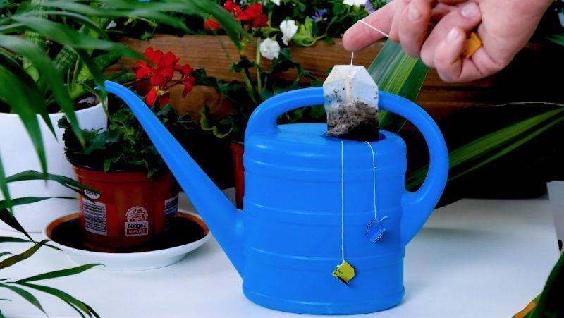 Не мусор, а золото: семь классных лайфхаков с использованными чайными пакетиками советы