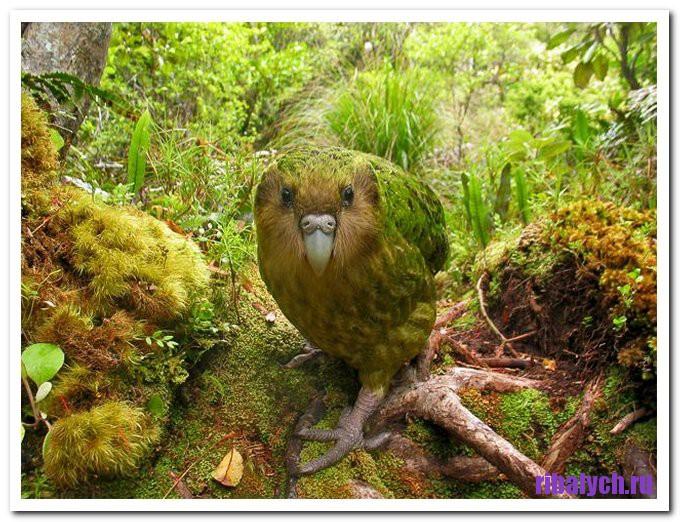 Самые редкие птицы мира