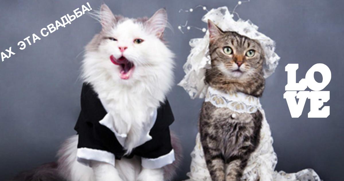 Без кота и свадьба не та! Как нарядить любимчика на свадебное торжество?