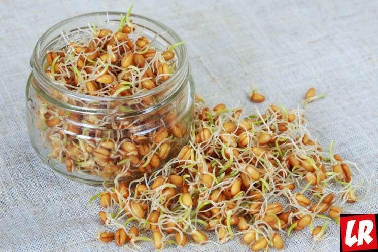 роÑтки пшеницы