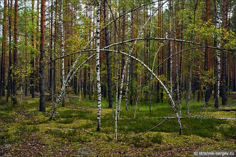 По грибы и ягоды в осенний лес