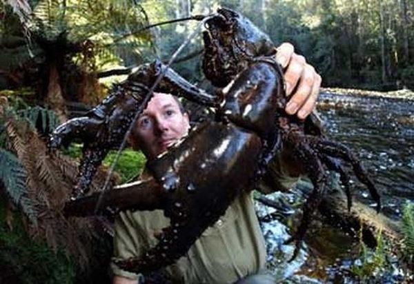 Самое большое пресноводное беспозвоночное животные,интересное