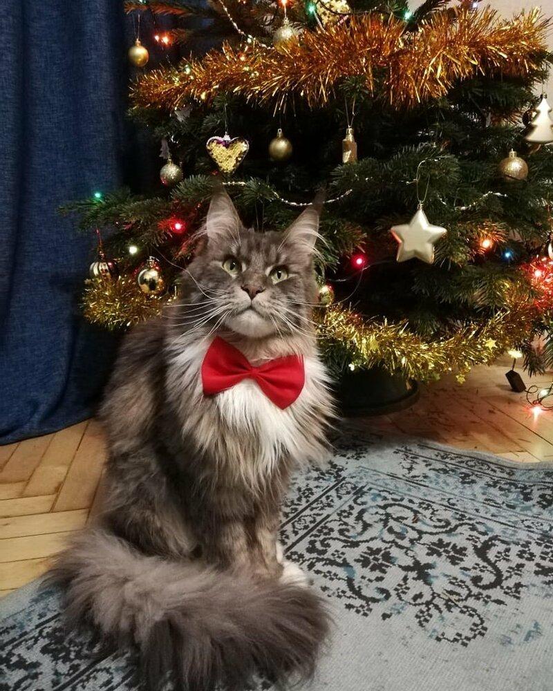 Я принарядился елка, игрушки, кот, новый год, разбой
