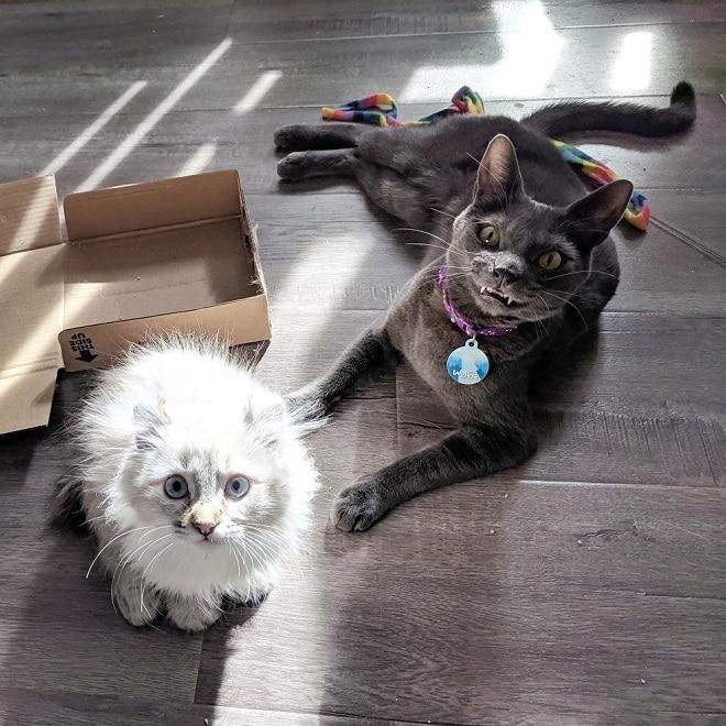 Коты на полу