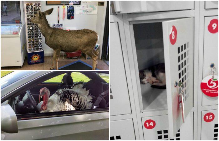 Животные, которые умеют появляться внезапно и эффектно