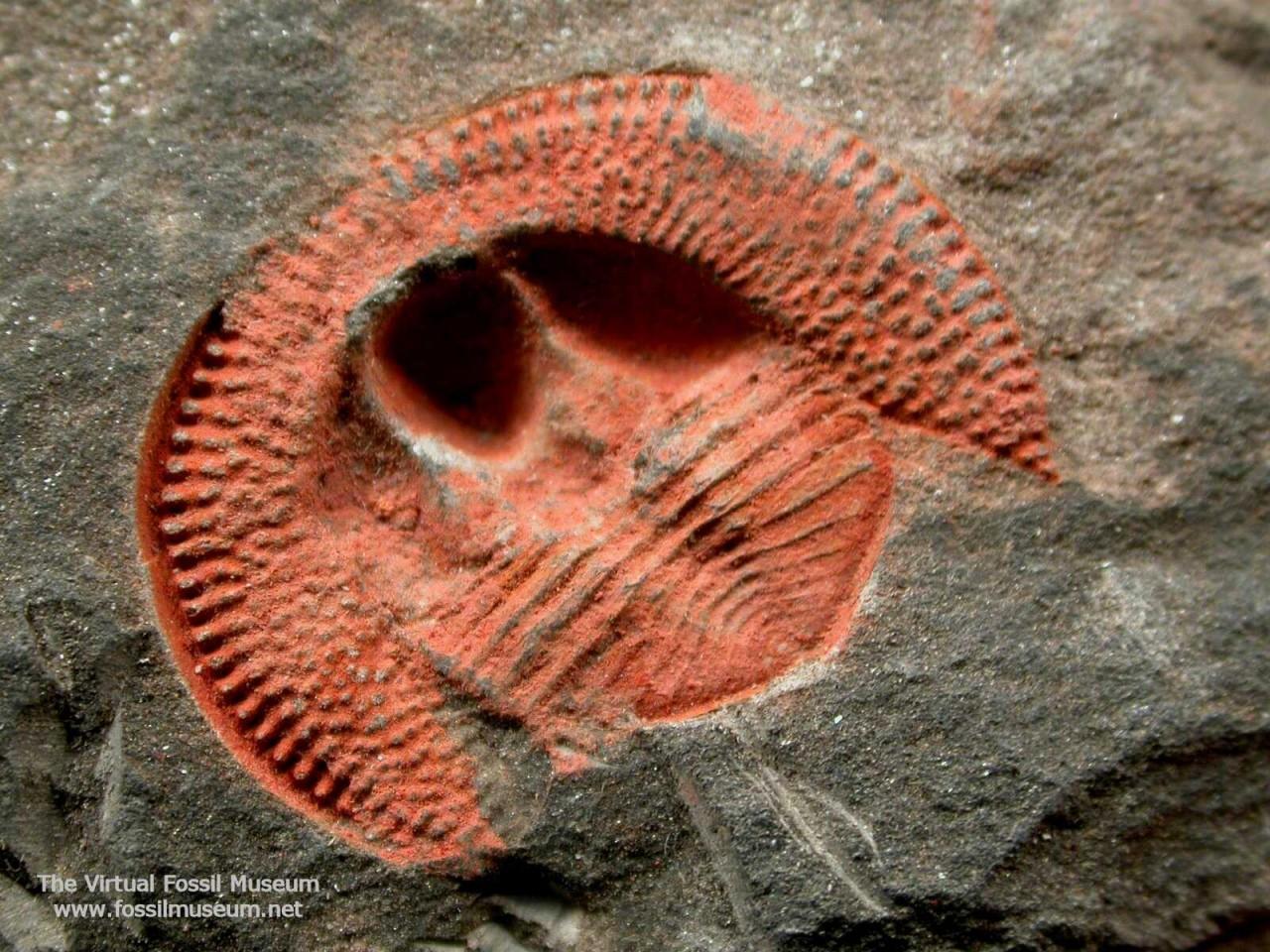 Геологи назвали причину первого массового вымирания