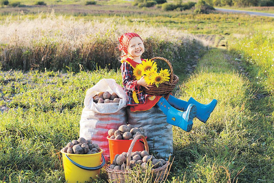 Картинки про урожай прикольные, открытки для