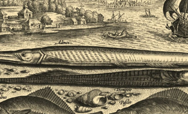Почему моряки никогда не ловили рыбу моряки,океан,почему рыбаки не ловили рыбу,Пространство,рыба,сигуатоксин