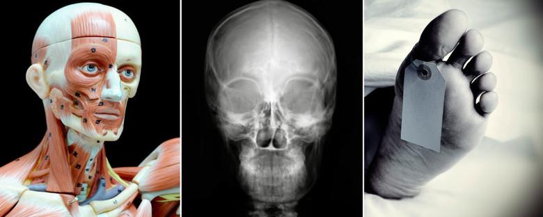 Что происходит с человеческим телом после смерти