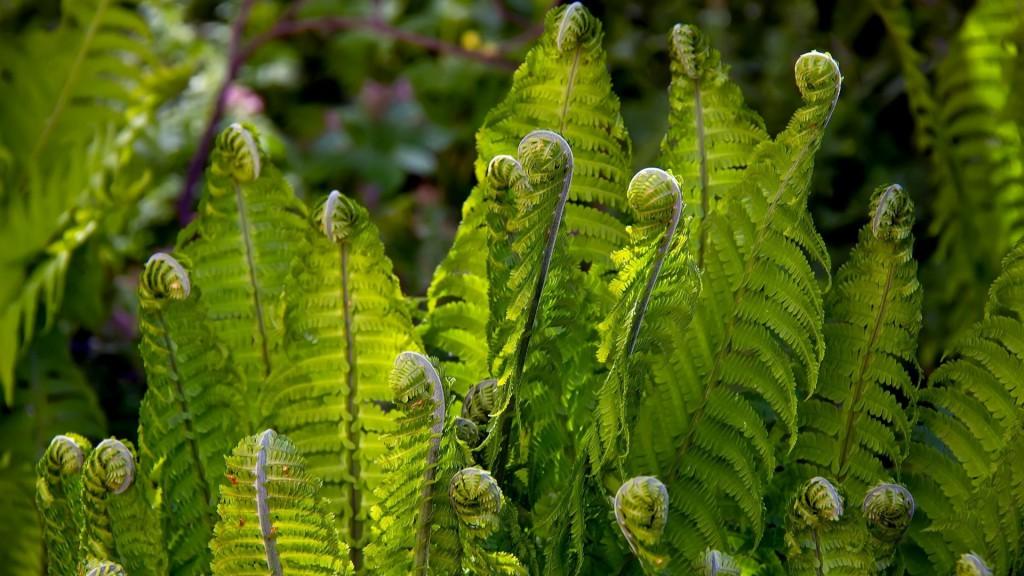 Одно из самых древних растений на Земле. Мистика и реалии папоротника