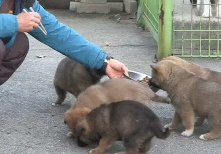 В поисках лучшей судьбы для своих щенков, собака привела их к одному дому