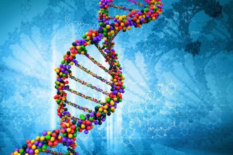 Поиск родственников через тест ДНК. Как ДНК может помочь узнать предков?
