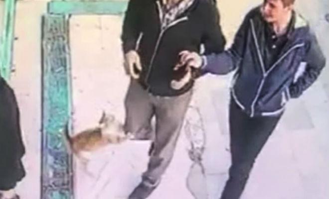 Люди пришли на рынок и столкнулись со сторожевым котом животные