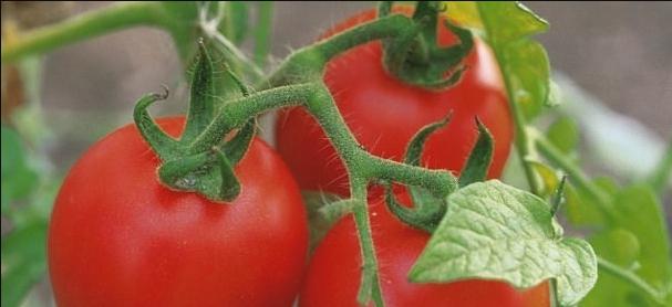 Как помогает соль, сода, дрожжи, молоко, кефир, горчица, кока-кола дачникам в саду и огороде