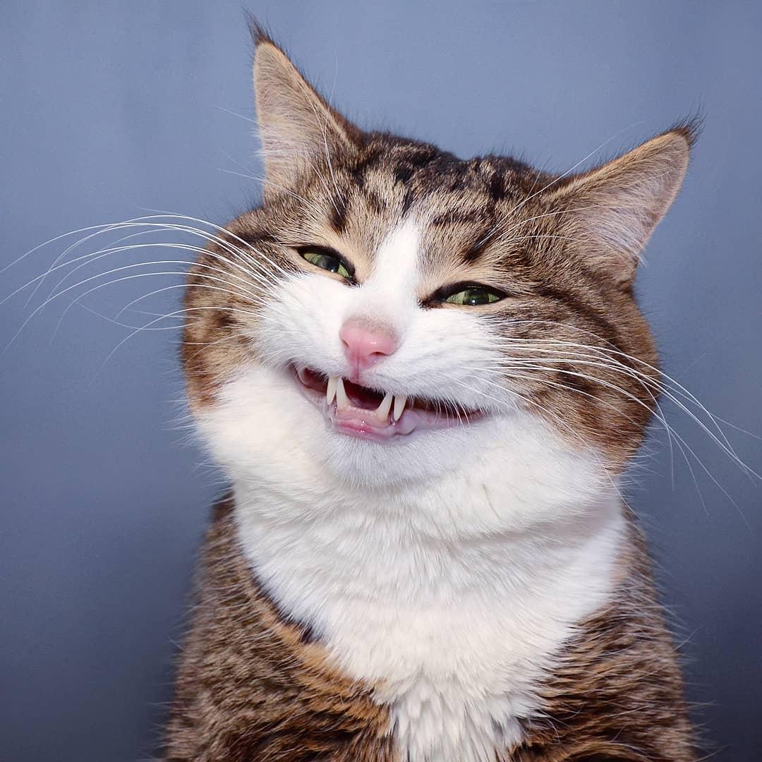 Картинка кот смешная