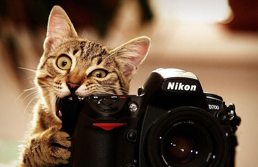 Прирожденные фотографы