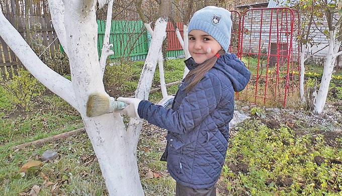 Пора белить деревья
