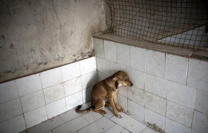 15 примеров борьбы за права животных, которые делают наш мир немного человечнее