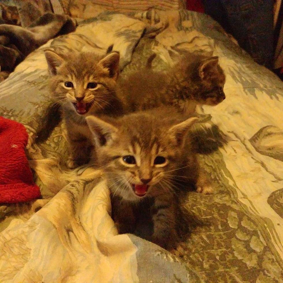 Кошка приносит своих котят ветерану-инвалиду и просит его позаботиться о них