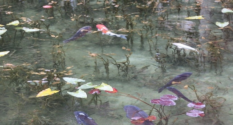 Пруд Моне — удивительный оазис в Японии, похожий на ожившую картину
