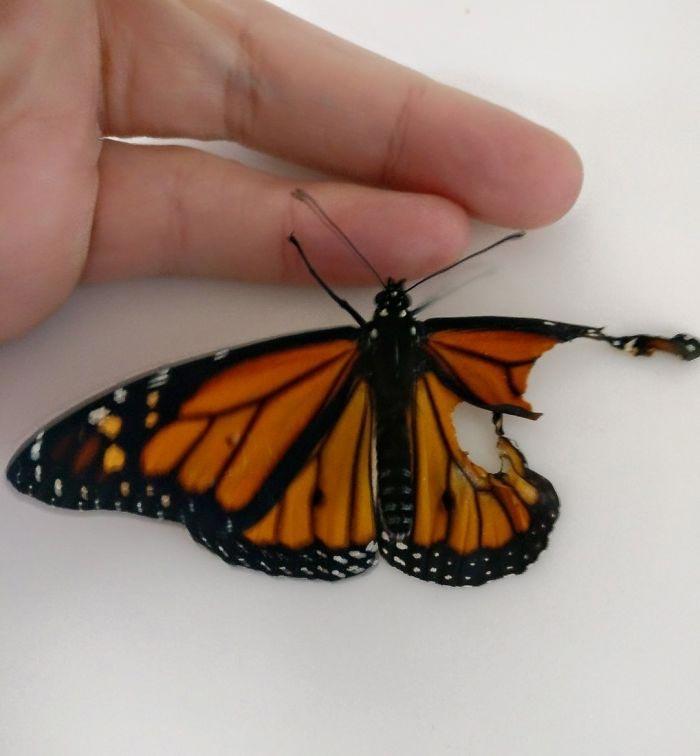 Успешная операция и бабочка может летать!