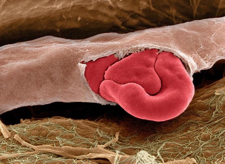 12 впечатляющих фото, которые расскажут о нашем теле больше, чем учебник