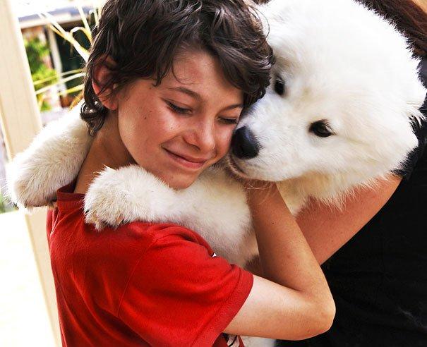 милые собаки обнимают своих хозяев (4)