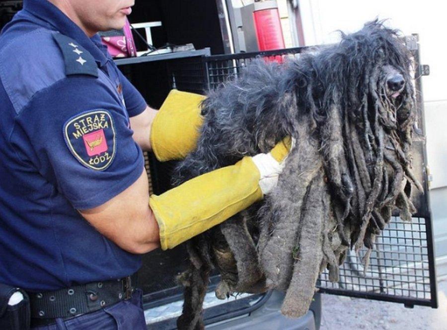 Хозяин превратил своего пса в практически неподвижный комок шерсти