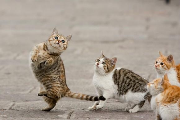 Танцующие коты поднимут вам настроение!