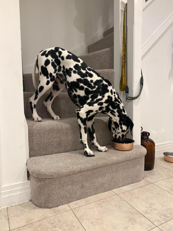Хозяевам этих собак не скучно со своими животными собаки,юмор и курьезы