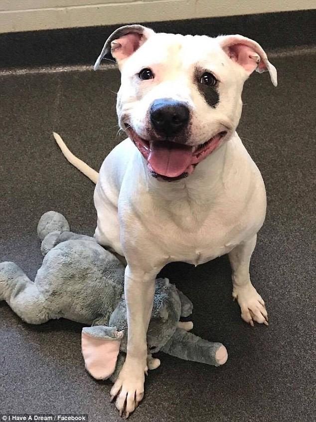 Спасенная собака научилась улыбаться Счастливый конец, люди, новый дом, собаки, спасение
