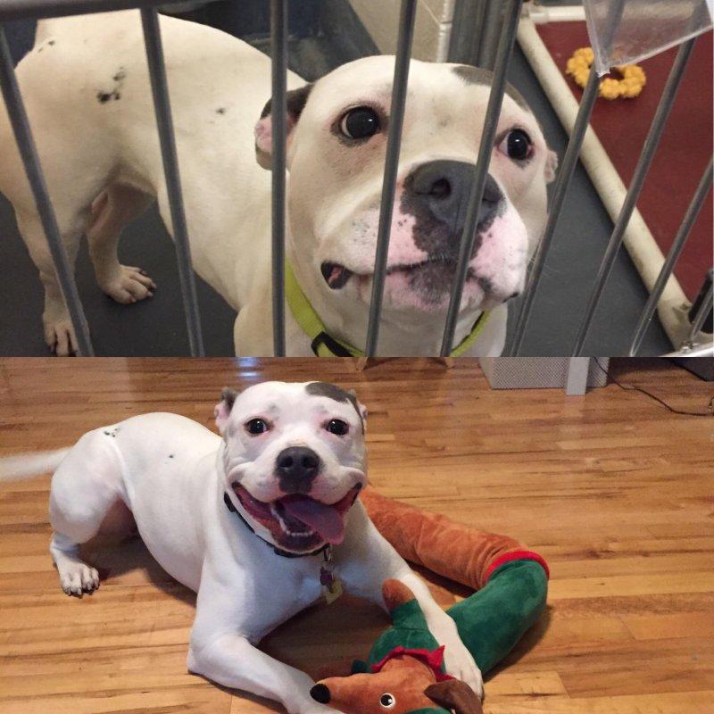 20 удивительных преображений животных, которые с улиц попали в заботливые руки до и после, истории спасения, история спасения, кошка, собака