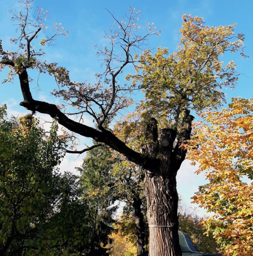 Топ-5 самых старых деревьев России деревьев, место, произрастает, острова, сосна, дерева, Ольхон, составляет, живой, реестра, вошли, «Деревья, песков, Псковской, плоскости, области, Quercus, песчаного, высота, массива