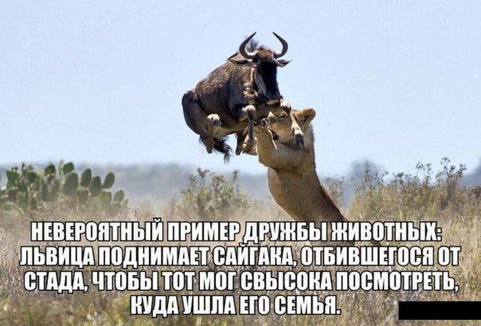 Взаимопомощь животных
