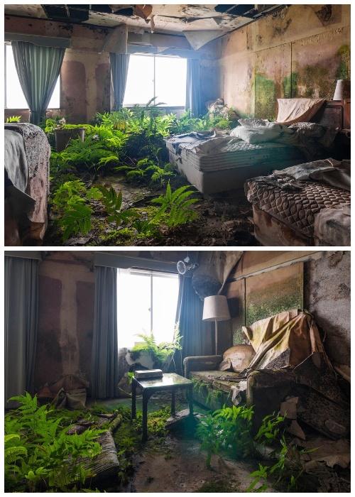 Из-за протекания крыши в номерах «поселилась» буйная растительность (Hachijo Royal Hotel, Япония).