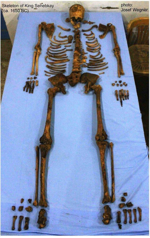 Таким его и нашли, собирали долго по косточкам, но восстановили скелет практически полностью. археология, древний египет, интересно, история, наука