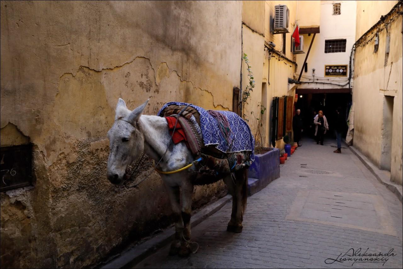"""Как выглядит настоящая """"собачья"""" работа Марокко"""