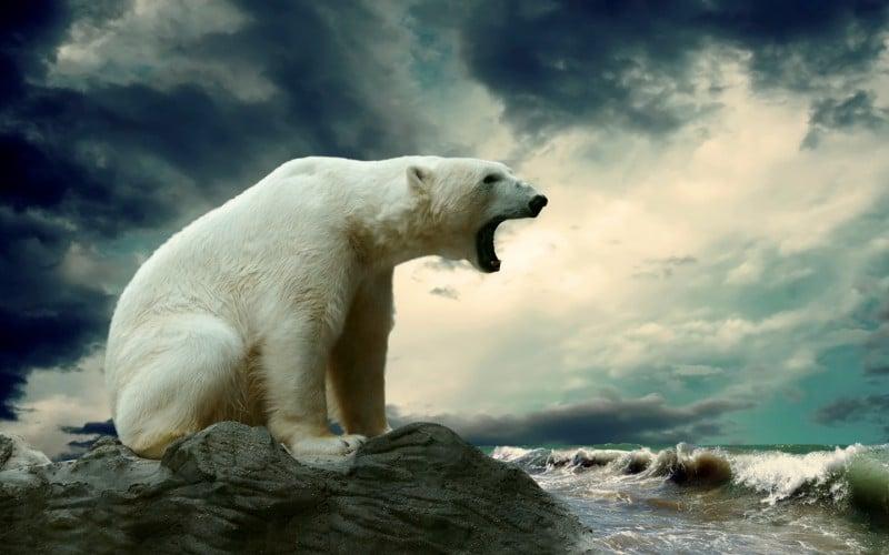 Факты об Антарктиде: вы этого не знали!