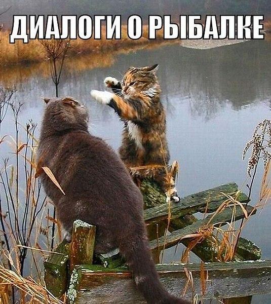 Подборка забавных фотографий с животными