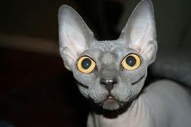Кошки-шпионы из космоса? Наши предки?