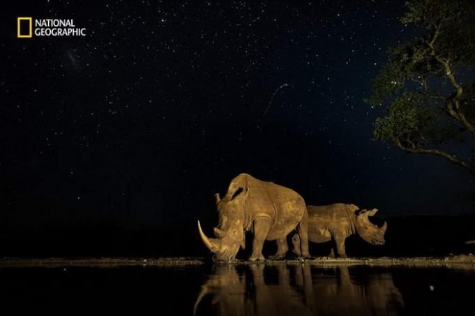 10 потрясающих фотографий дикой природы с конкурса National Geographic Nature Photographer of the Year Contest