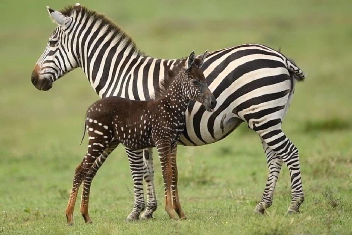 который картинки окрашенных животных других