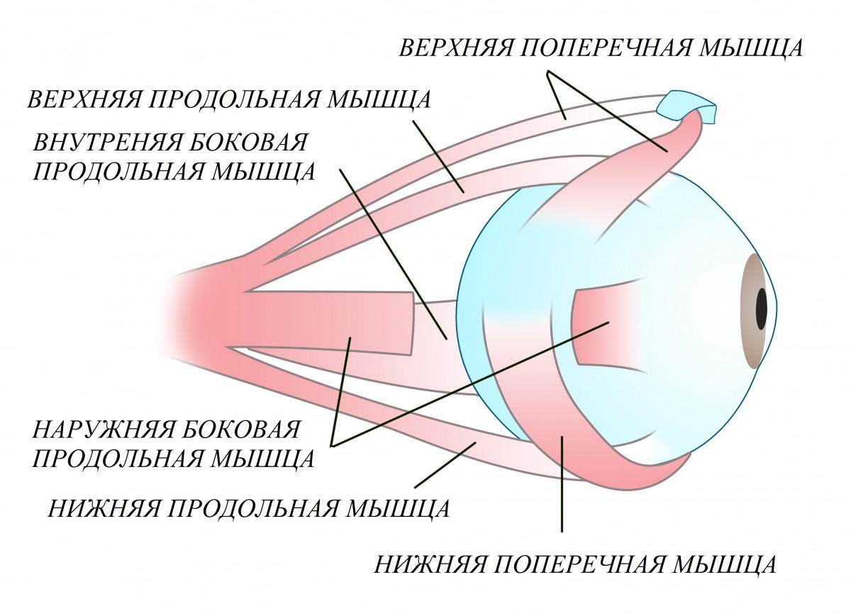 Линзы для зрения цветные екатеринбург