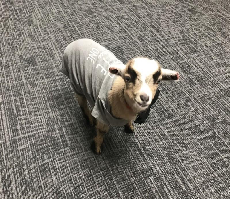Чудом выживший на морозе коз…