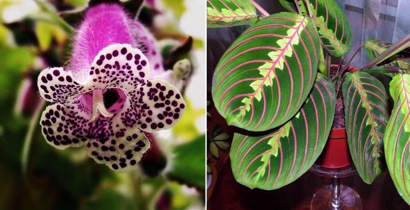 9 экзотических комнатных растений, от которых просто невозможно отвести взгляд.