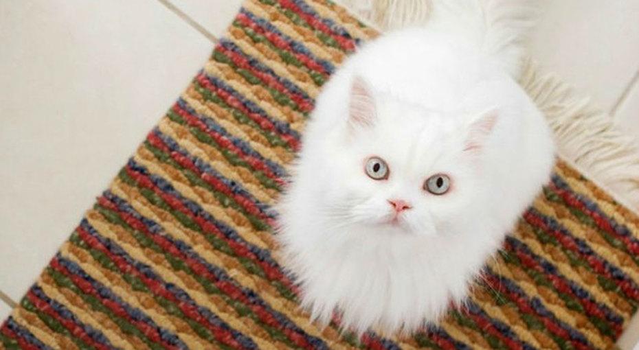 Как удалить пятна от мочи домашних животных с ковров и других поверхностей
