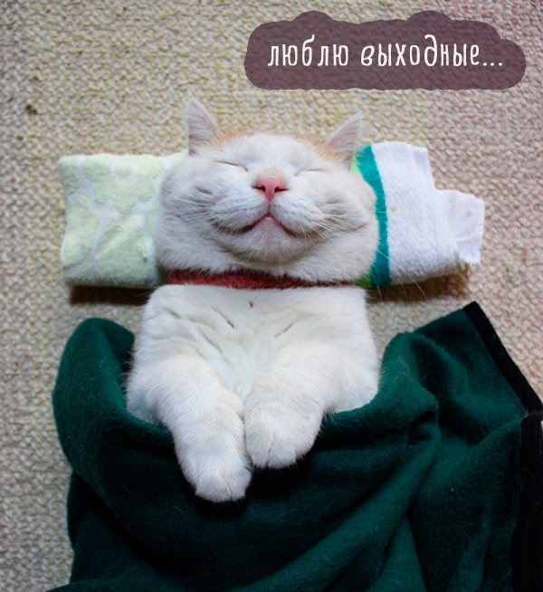 Самые смешные кошки: лучшая подборка картинок и фото не всё так грустно